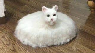 getlinkyoutube.com-Unique Cats Video Compilation 2017