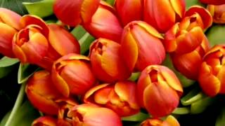 getlinkyoutube.com-วันพฤหัสบดีสีส้ม