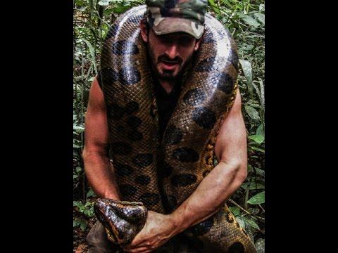 Hombre es comido vivo por una anaconda - Paul Rosolie documental
