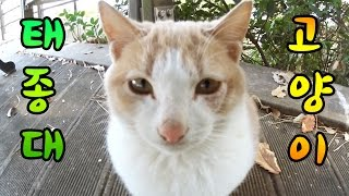 getlinkyoutube.com-[허팝투어] 부산[태종대]고양이를 아세요? You know the cats living in Taejongdae, Busan.