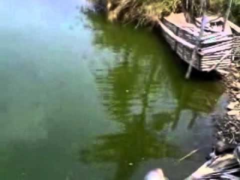 mancing ikan bawal di kampung batu