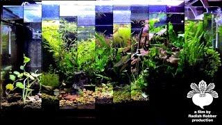 getlinkyoutube.com-【アクアリウム】初めての水草水槽、一年分【初心者】