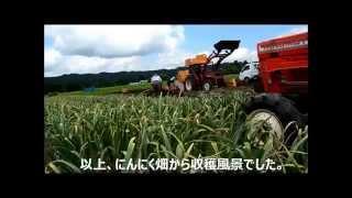 getlinkyoutube.com-にんにく栽培【収穫編】(2014.06.24)にんにくのよしだ家