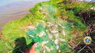 getlinkyoutube.com-Gran pesca de #Tilapias con red