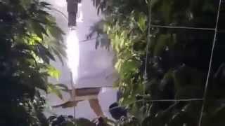 getlinkyoutube.com-▶ Vertical CANNABIS Grow Day 35 Flower REPOST
