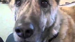 كلب يتكلم مثل البشر