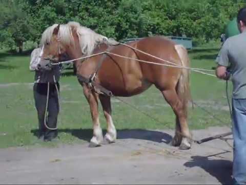 ujeżdżanie konia