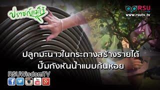 getlinkyoutube.com-ปราชญ์แม่โจ้ : ปลูกมะนาวในกระถางสร้างรายได้ / ปั๊มกังหันน้ำแบบก้นหอย