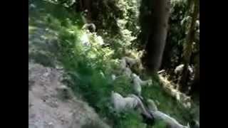getlinkyoutube.com-Gaddi pastoralist shepherds Himachal Pradesh, India