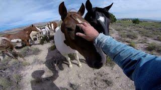 getlinkyoutube.com-GoPro: Wild Mustangs - A Legacy in 4K