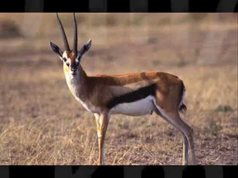 Top 10 Fastest Land Animals New by Odissey505
