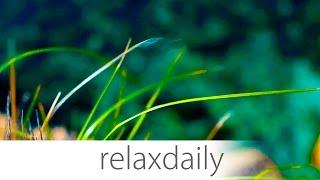 getlinkyoutube.com-Instrumental Music - relaxing, light, easy, background - Season 3