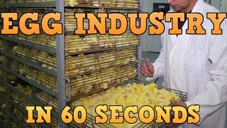 getlinkyoutube.com-Egg Industry In 60 Seconds
