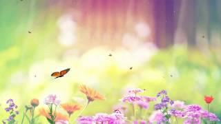 getlinkyoutube.com-Butterfly Paradise Screensaver http://www.screensavergift.com