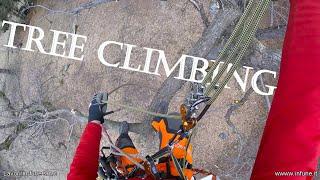 Potatura castagno - Tree Climbing - Gopro Hero Session