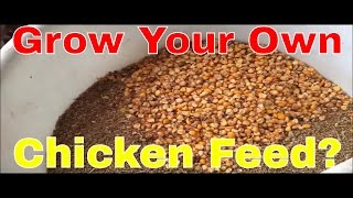 getlinkyoutube.com-Grow Your Own Chicken Feed