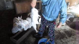 getlinkyoutube.com-Куры и кролики