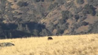 getlinkyoutube.com-.308 vs Wild Boar!!