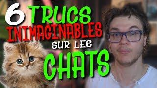 CHRIS : 6 Trucs Inimaginables Sur Les Chats