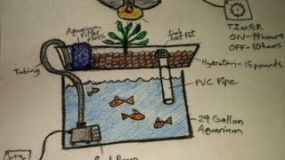 getlinkyoutube.com-Aquaponics for Dummies - The Easiest DIY Indoor Aquaponic System