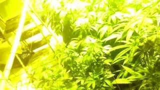 getlinkyoutube.com-How to make a  cheap grow room--closed system