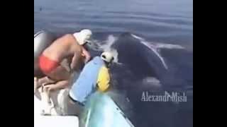 getlinkyoutube.com-المعنى الحقيقي للإنسانية.... بشر ينقذون حيوانات من الهلاك