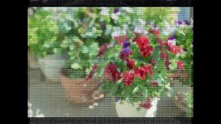 getlinkyoutube.com-心のいこい【長所と短所】2015.11.11