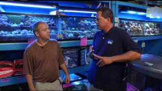 getlinkyoutube.com-Blue Zoo TV - Episode 4 (Part 1): The Giant Pet Puffer...