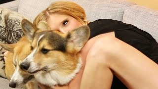 getlinkyoutube.com-Boyfriend Surprises Girlfriend With Corgis