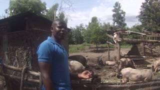 EWB Arito Langi, Kenya - Visiting a pig farm nearby 2