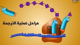 getlinkyoutube.com-مراحل عملية الترجمة RNA
