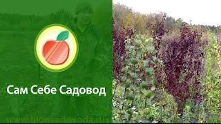 getlinkyoutube.com-Питомник плодовых деревьев с нуля