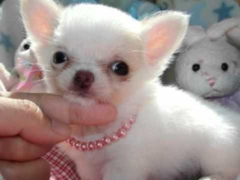 Come scegliere un cane di piccola taglia  Animali dal Mondo
