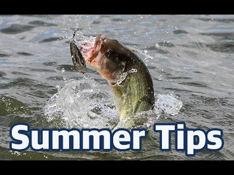 How to catch bass in the summer - In-depth fishing advice and lure choices
