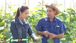 getlinkyoutube.com-รายการปราชญ์เกษตร ตอนที่2 สุดยอดเมล่อนไทย