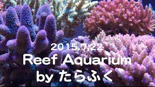 getlinkyoutube.com-Reef Aquarium by たらふく⑩