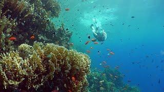 Red Sea Diving Safari - Free Diving Promotional Video in 4K UHD