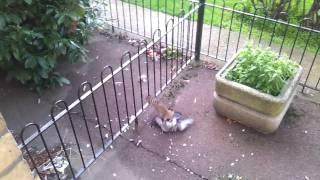 getlinkyoutube.com-Bird eating a bird alive