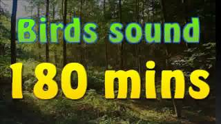 getlinkyoutube.com-Sound of nature - birds song (no music) 180 mins