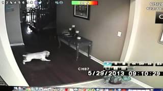 getlinkyoutube.com-Ghosts in my house!!! [REAL GHOST FOOTAGE]