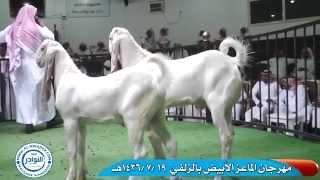 getlinkyoutube.com-الماعز الأبيض - المهرجان الأول بالزلفي (الجزء3)
