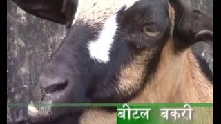 getlinkyoutube.com-Bakri Palan Pramukh Naslen