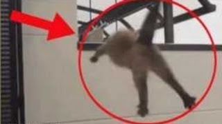 getlinkyoutube.com-Funniest TOP 5 Cats Suicide / Cats Jump Fail Kitty Funny