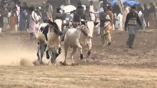 getlinkyoutube.com-malik nawaz khan ikhlas Jalsa malal bull race gernate
