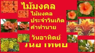 getlinkyoutube.com-ไม้มงคล ประจำวันเกิด คำทำนาย วันอาทิตย์