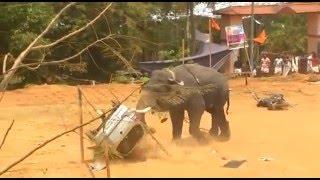 Elephant attack alancheri
