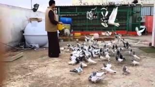 getlinkyoutube.com-عشقي الحمام الباكستاني الطيار