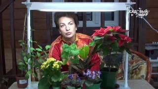 Чем досвечивать комнатные растения.