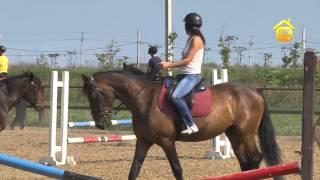 Выбор лошади и уход за ней