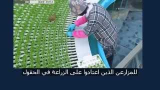 الزراعة المائية في اليابان هيدروبونك